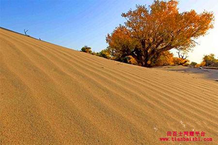 沙漠里的沙子可以用来盖房子吗?